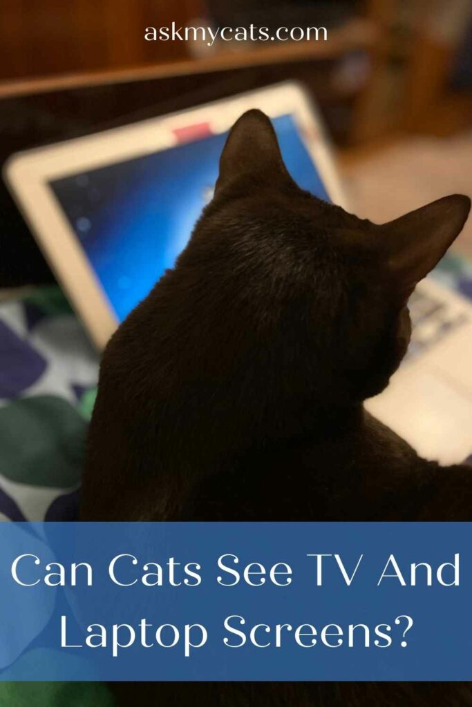Can Cats See TV And Laptop Screens?