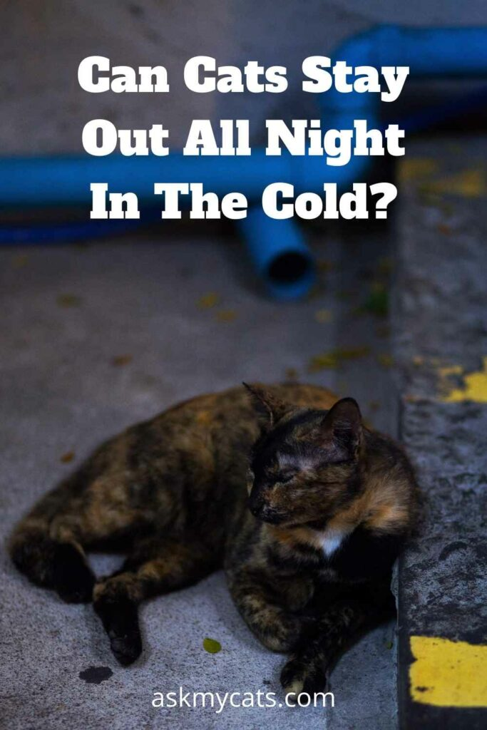 Can Cats Stay Out All Night In The Cold?