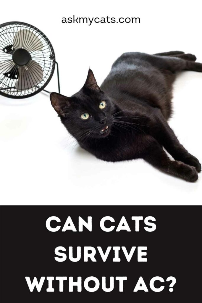 Can Cats Survive Without AC?