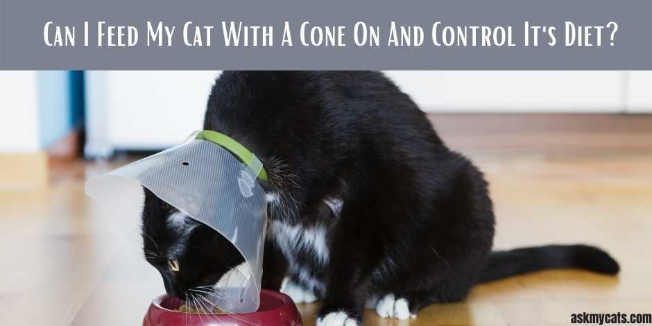 Can I Feed My Cat With A Cone On And Control Its Diet