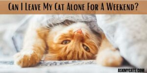 Can I Leave My Cat Alone For A Weekend? Will It Be Able To Survive Alone?