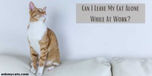 Can I Leave My Cat Alone While At Work? How Will It Affect My Cat?