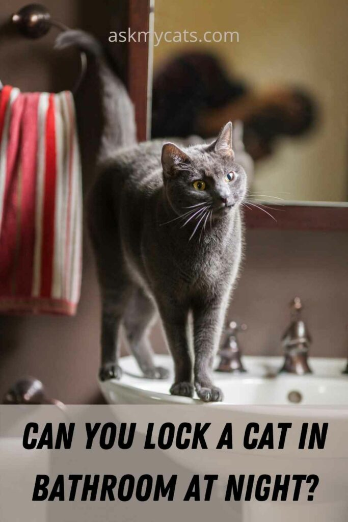Can You Lock A Cat In Bathroom At Night?