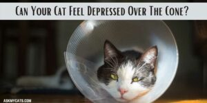 Can Your Cat Feel Depressed Over The Cone? How To Reduce It?