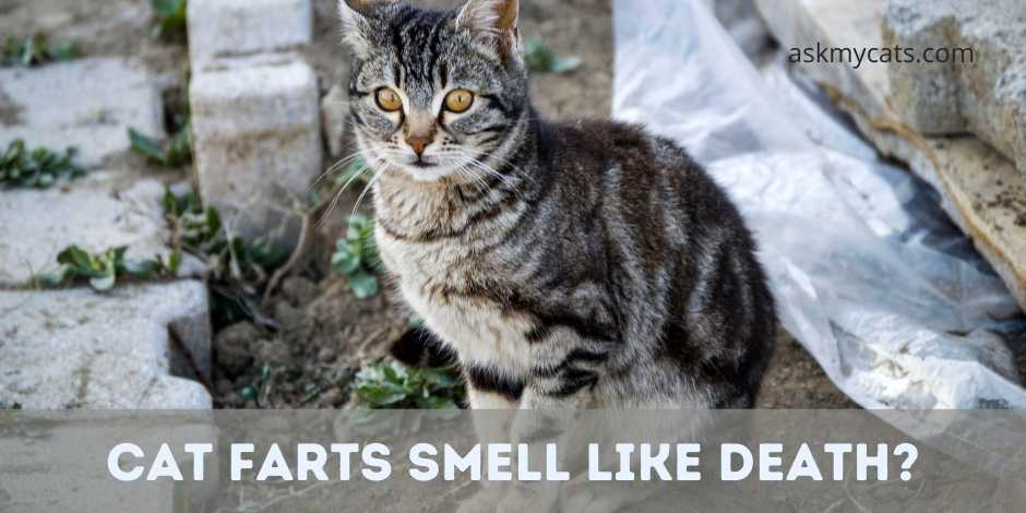 Cat Farts Smell Like Death