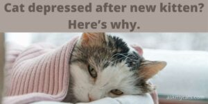 Cat Depressed After New Kitten? Here's Why