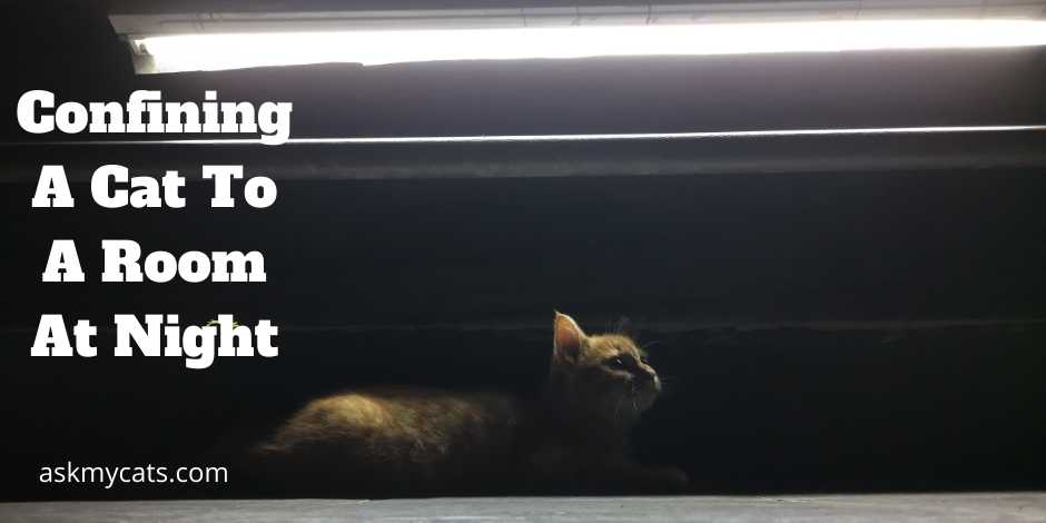 Confining A Cat To A Room At Night