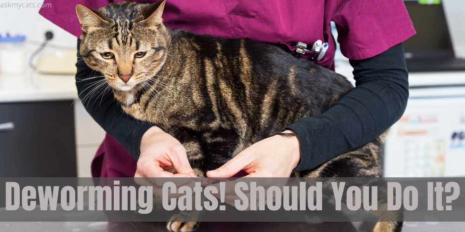 Deworming Cats! Should You Do It?