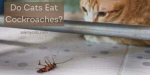 Do Cats Eat Cockroaches? Are They Capable of Killing Them?