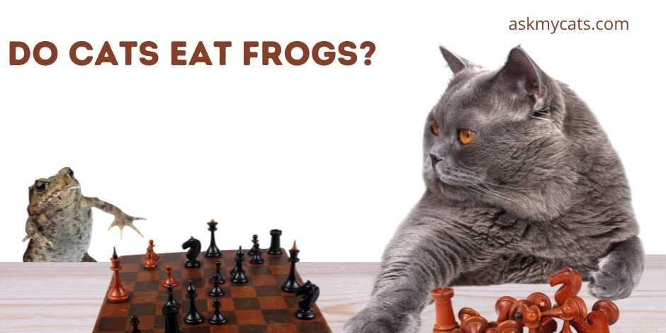 Do Cats Eat Frogs