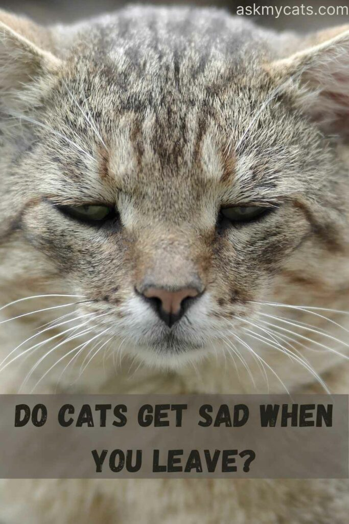 Do Cats Get Sad When You Leave?