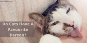 Do Cats Have A Favourite Person?