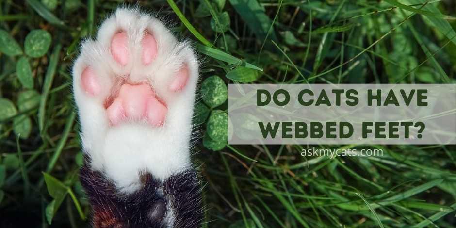 Do Cats Have Webbed Feet