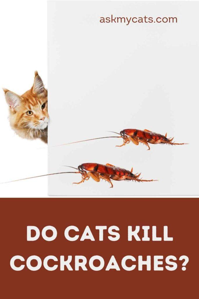 Do Cats Kill Cockroaches?