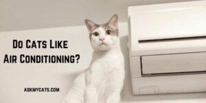 Do Cats Like Air Conditioning? Must Know Facts Before You Annoy Them!