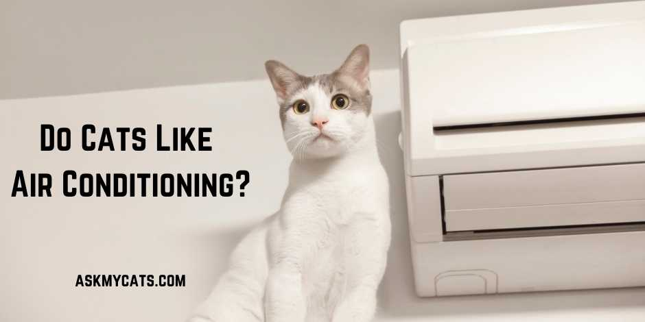 Do Cats Like Air Conditioning