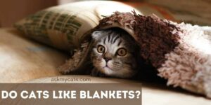 Do Cats Like Blankets? Can We Cover Cats With Blankets?