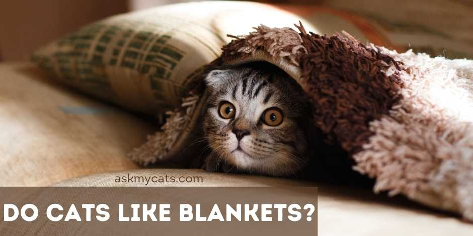 Do Cats Like Blankets