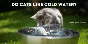 Do Cats Like Cold Water? What's Their Preference?