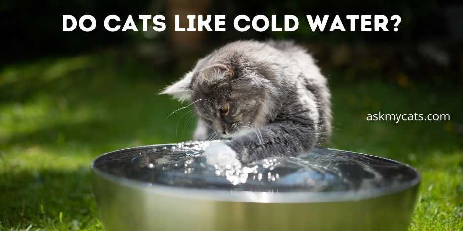 Do Cats Like Cold Water