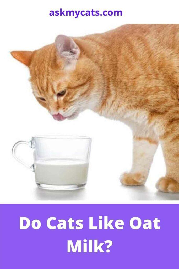 Do Cats Like Oat Milk?