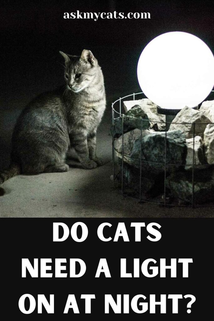 Do Cats Need A Light On At Night?