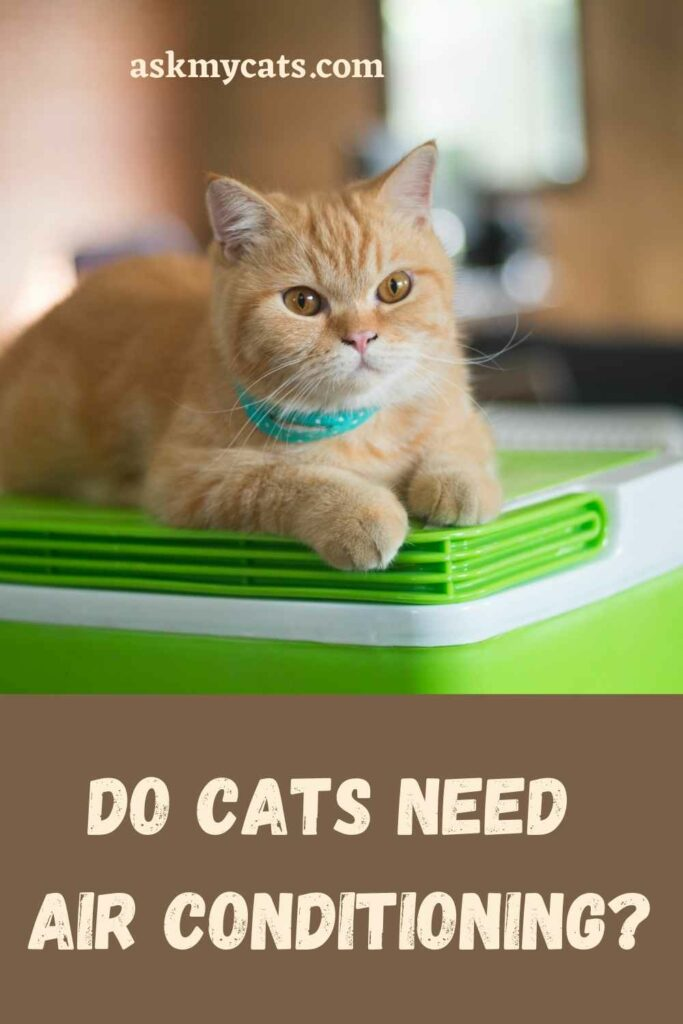Do Cats Need Air Conditioning?