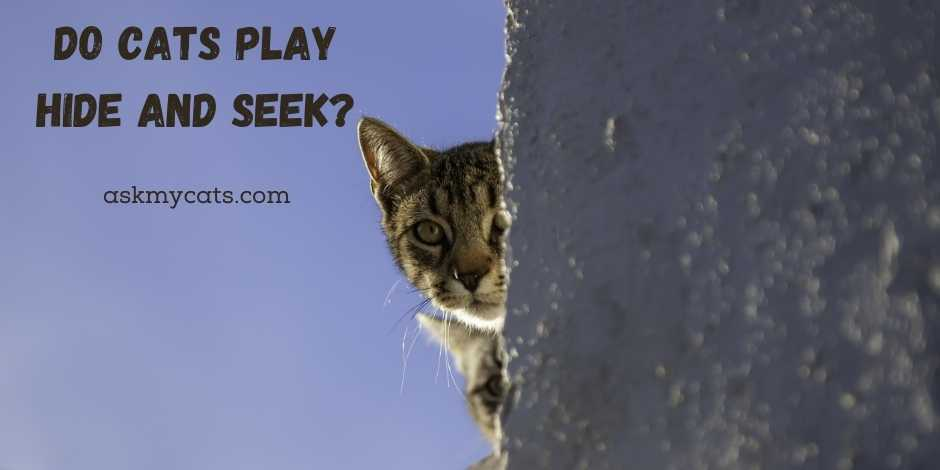 Do Cats Play Hide and Seek