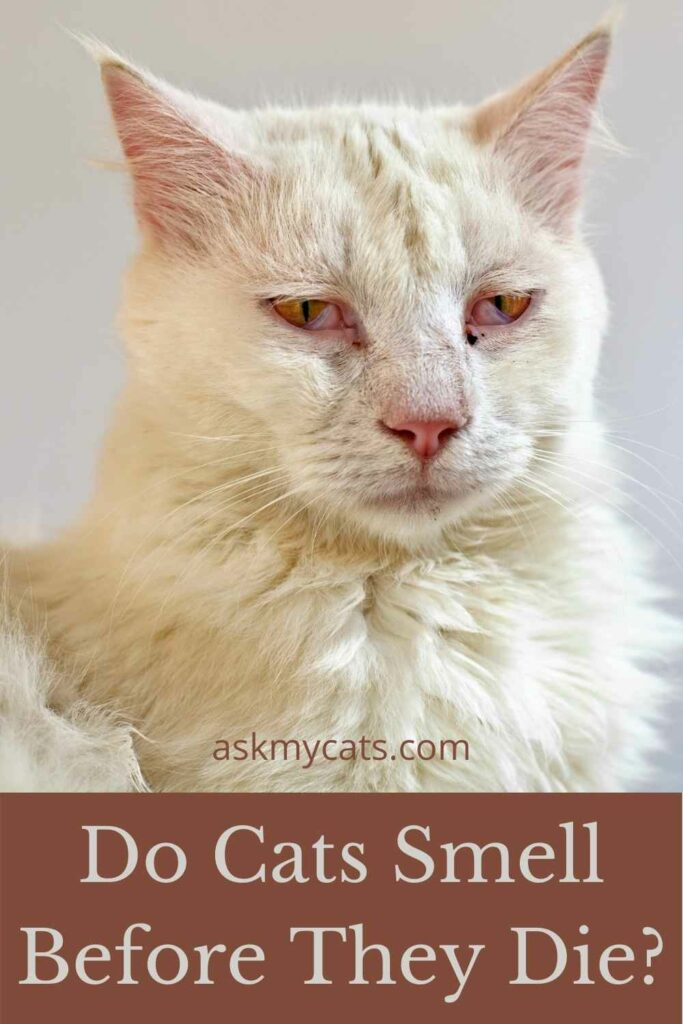 Do Cats Smell Before They Die?