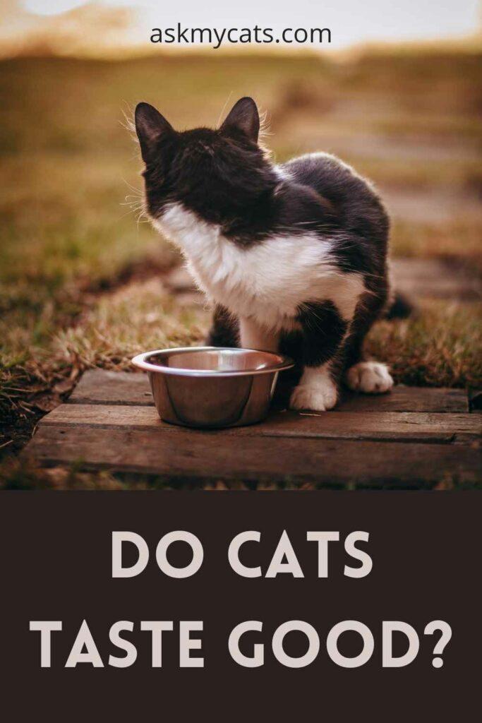 Do Cats Taste Good?