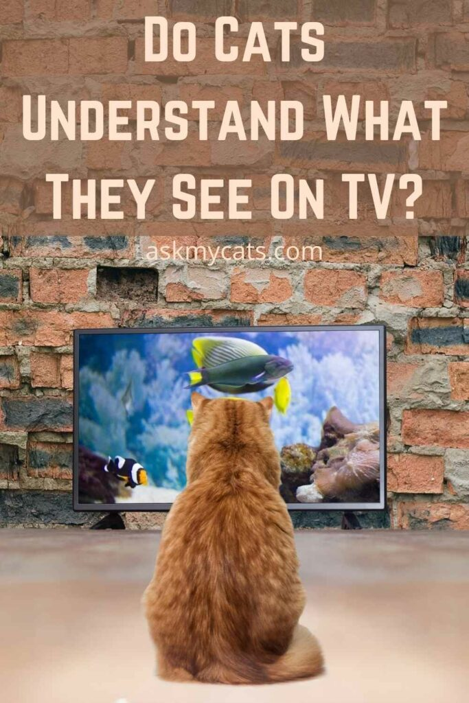 Do Cats Understand What They See On TV?