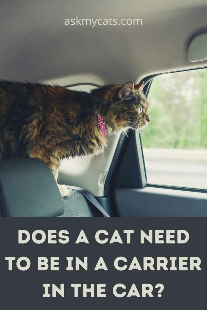 Does A Cat Need To Be In A Carrier In The Car?