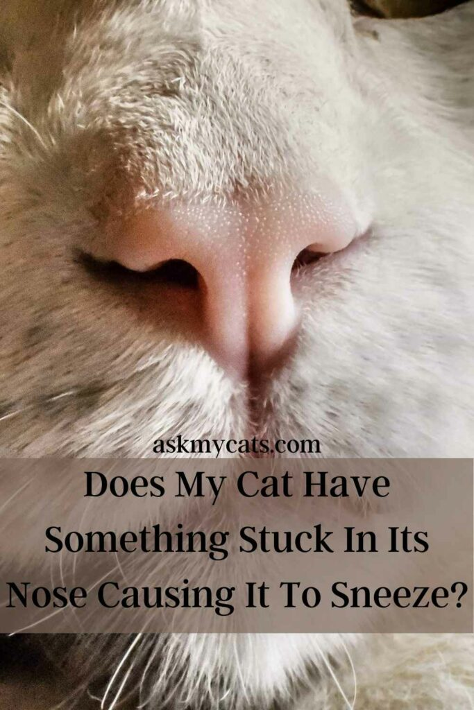 Does My Cat Have Something Stuck In Its Nose Causing It To Sneeze?