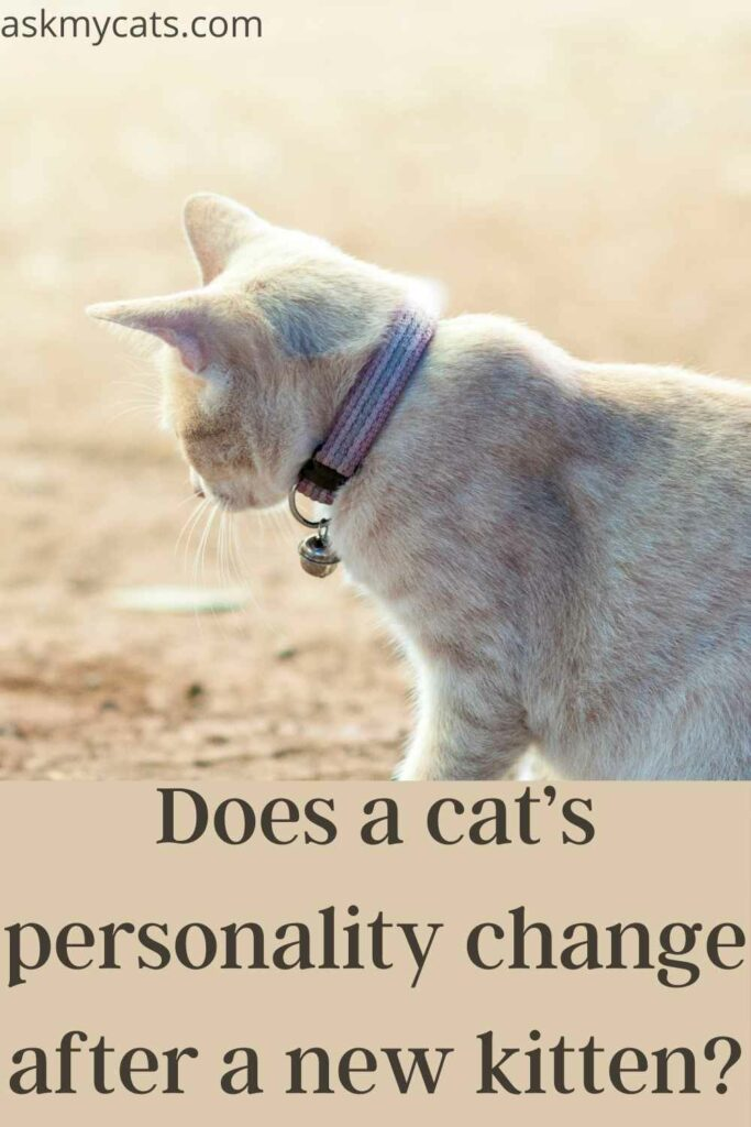 does a cat's personality change after a new kitten