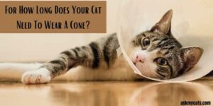 For How Long Does Your Cat Need To Wear A Cone? Does The Cone Hurt Your Cat?