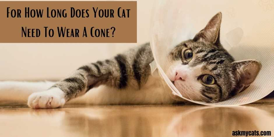 For How Long Does Your Cat Need To Wear A Cone