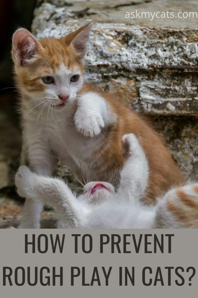 how to prevent rough play in cats