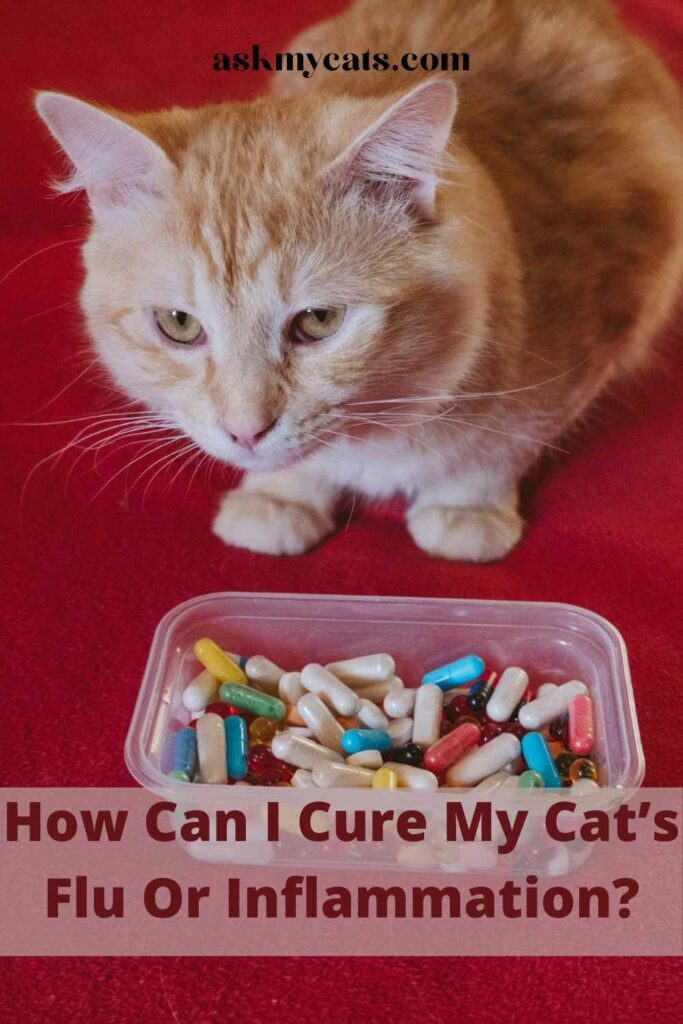 How Can I Cure My Cat's Flu Or Inflammation?