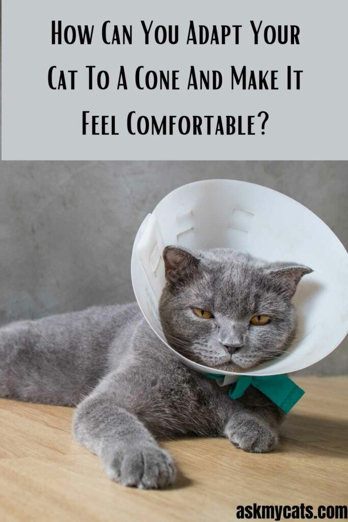 How Can You Adapt Your Cat To A Cone And Make It Feel Comfortable?