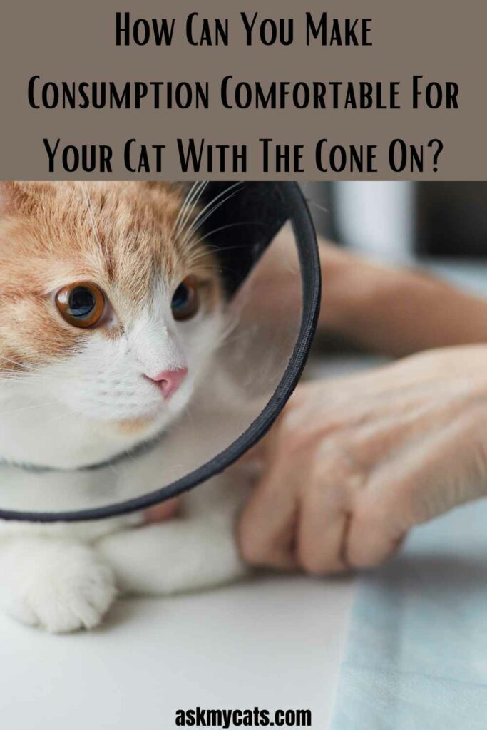 How Can You Make Consumption Comfortable For Your Cat With The Cone On?