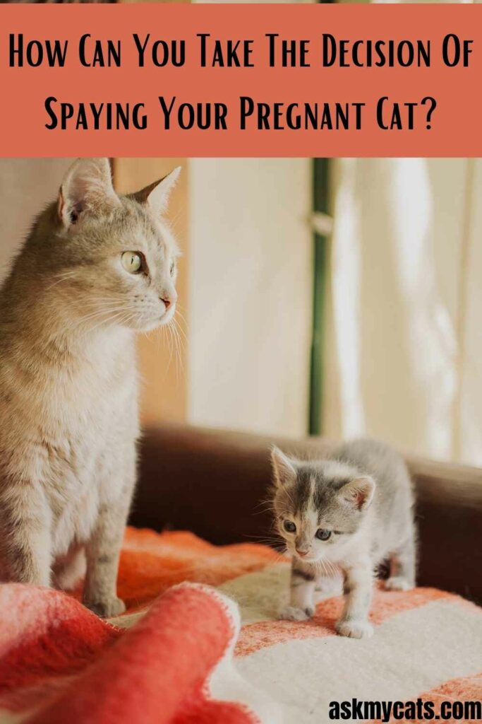 How Can You Take The Decision Of Spaying Your Pregnant Cat?