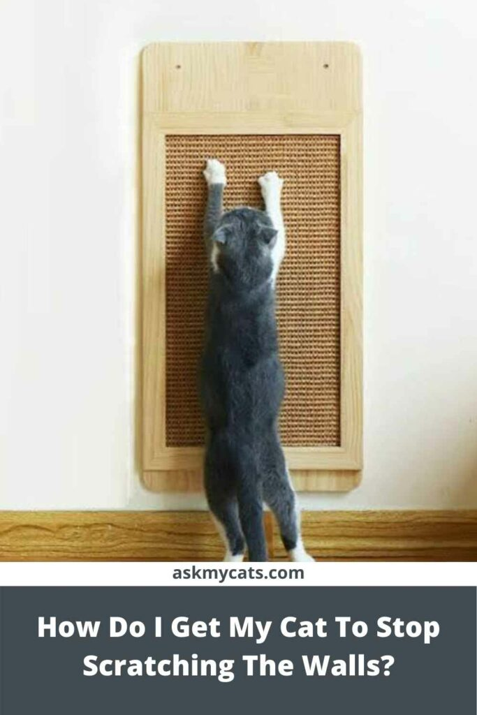 How Do I Get My Cat To Stop Scratching The Walls?