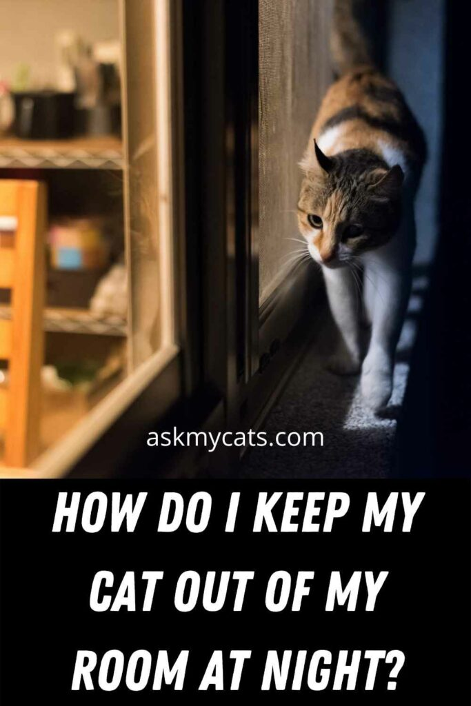 How Do I Keep My Cat Out Of My Room At Night?