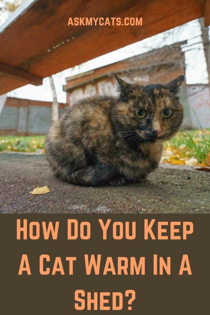 How Do You Keep A Cat Warm In A Shed?