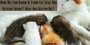 How Do You Know If Your Cat Still Has Kittens Inside? Will Any Kitten Die?
