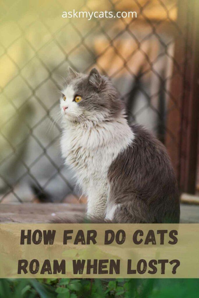 How Far Do Cats Roam When Lost?