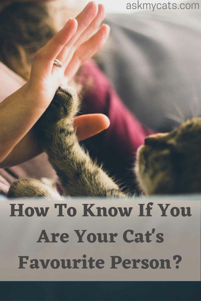 How To Know If You Are Your Cat's Favourite Person?