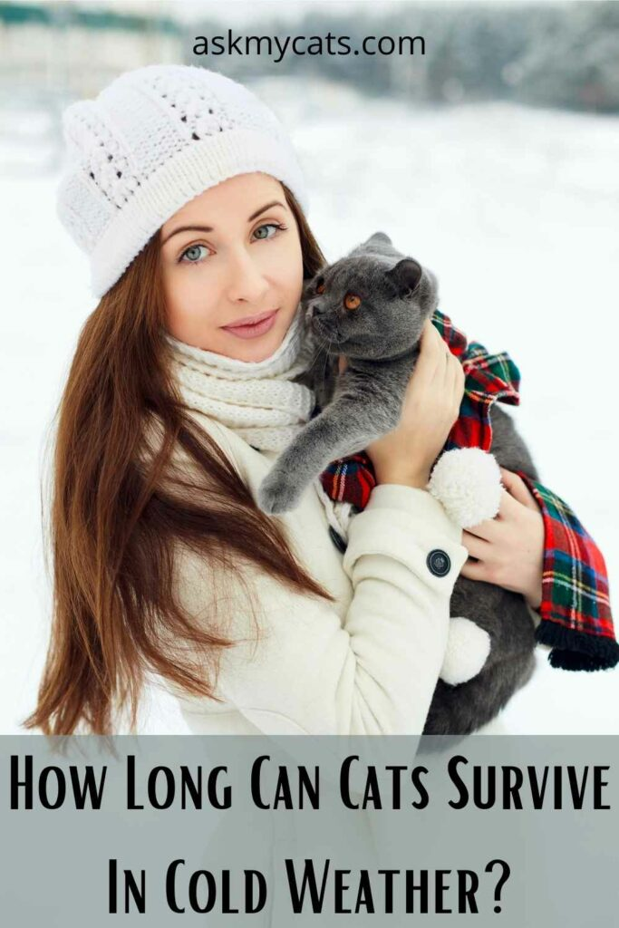How Long Can Cats Survive In Cold Weather?
