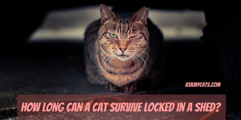 How Long Can a Cat Survive Locked in a Shed