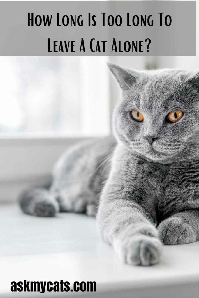 How Long Is Too Long To Leave A Cat Alone?